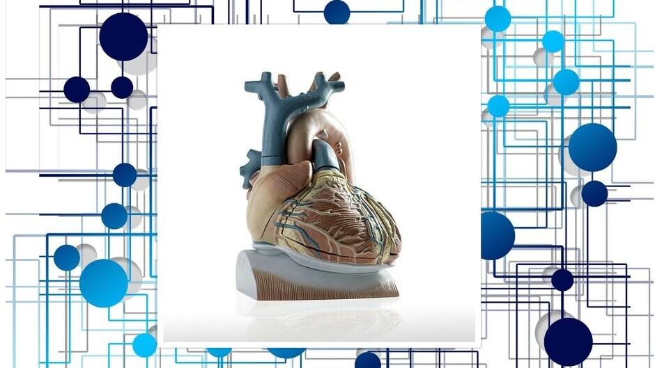 Simulationsplattform für Herzrhythmusstörungen